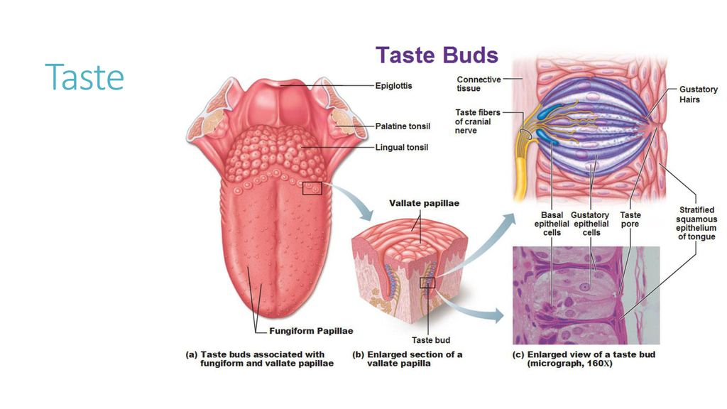 All About Inflamed Enlarged Taste Buds Pictures Causes Kidskunstfo