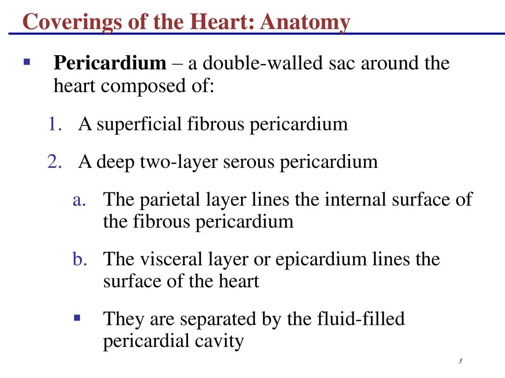 Magnificent Heart Layers Anatomy Pattern - Physiology Of Human Body ...