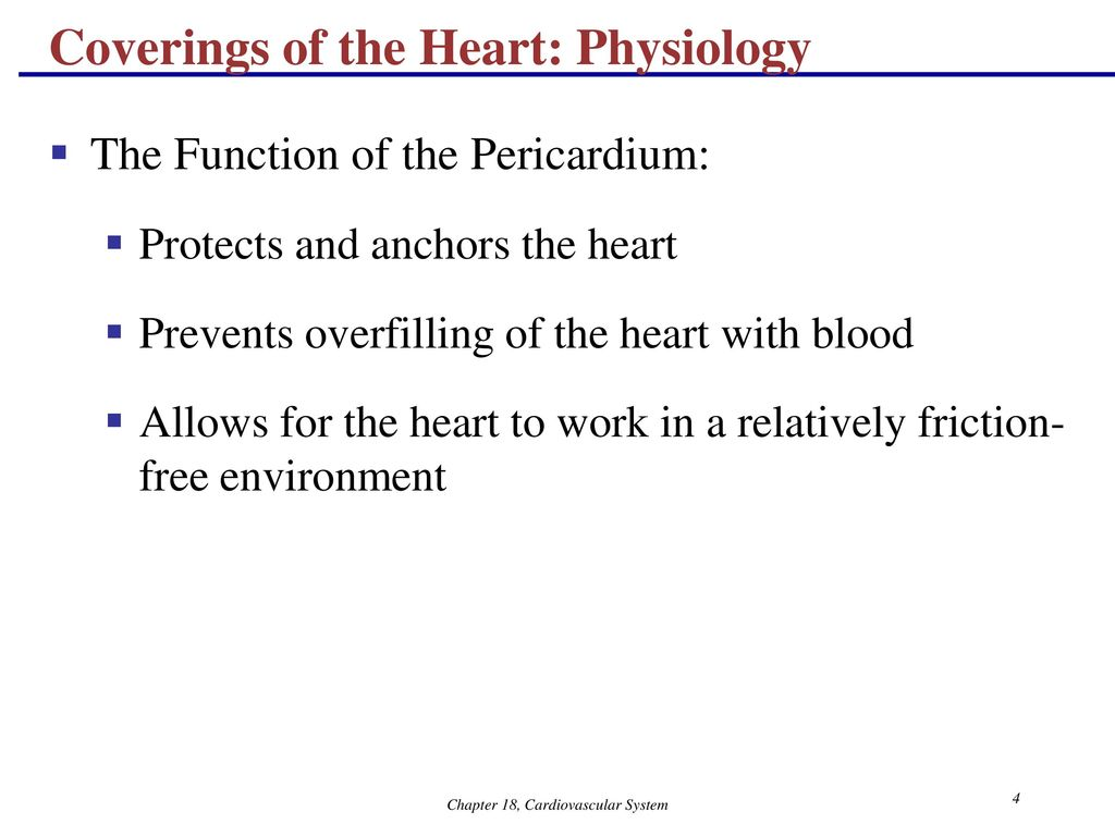 The Cardiovascular System: The Heart Anatomy - ppt download