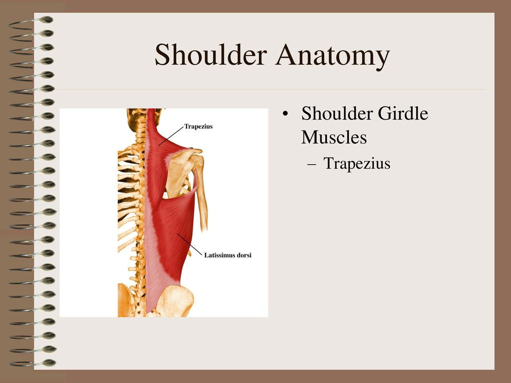 Shoulder Anatomy Dr. Mohamed Samieh. - ppt download