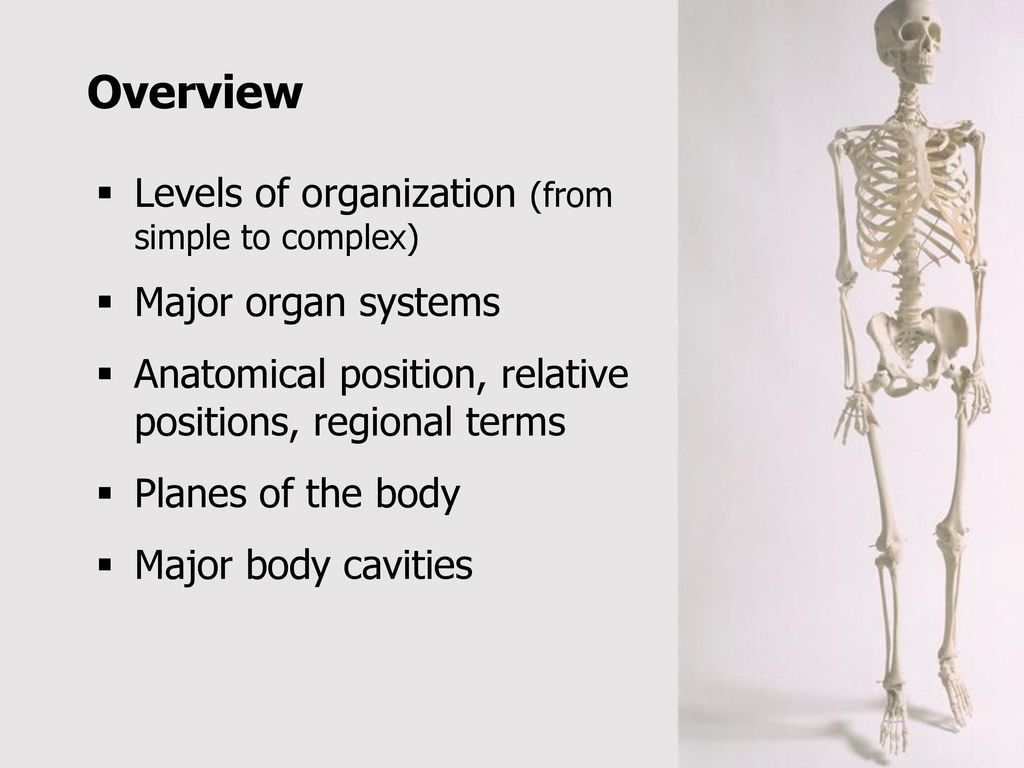 Introduction to the Human Body - ppt download