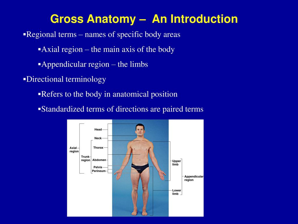 Anatomy & Physiology An Introduction - ppt download