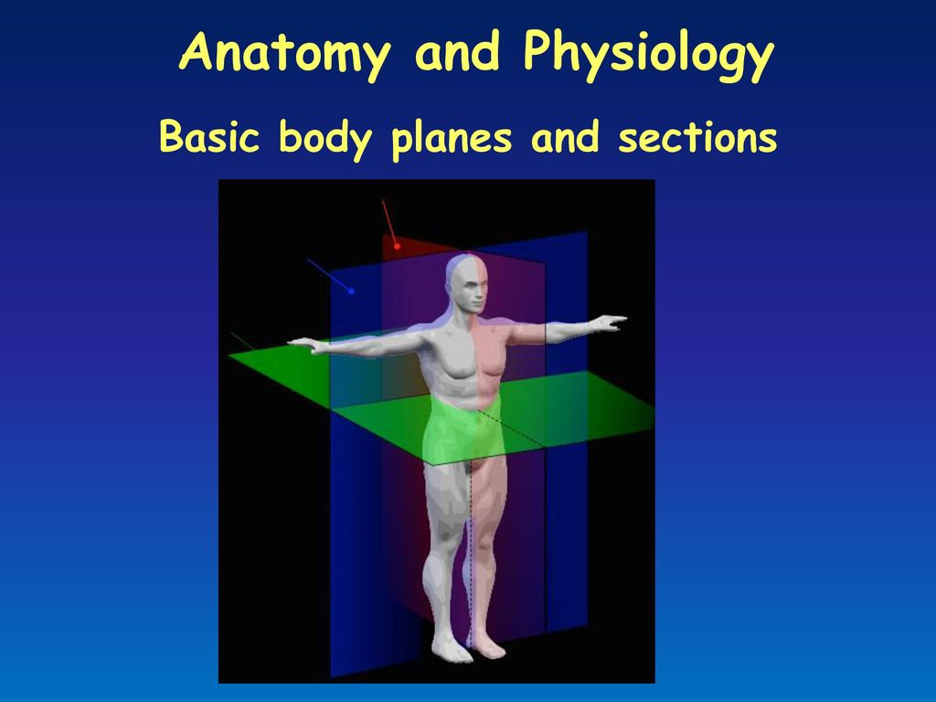 Basic body planes and sections - ppt download