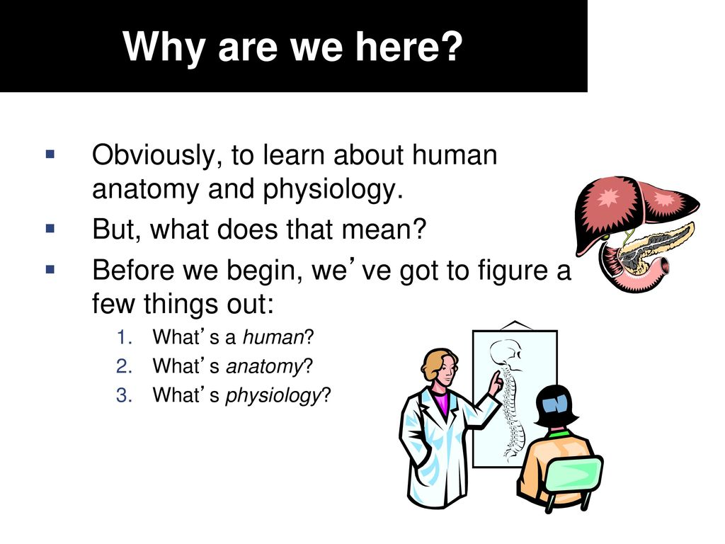 Fantastic What Does Anatomy Illustration - Anatomy and Physiology ...