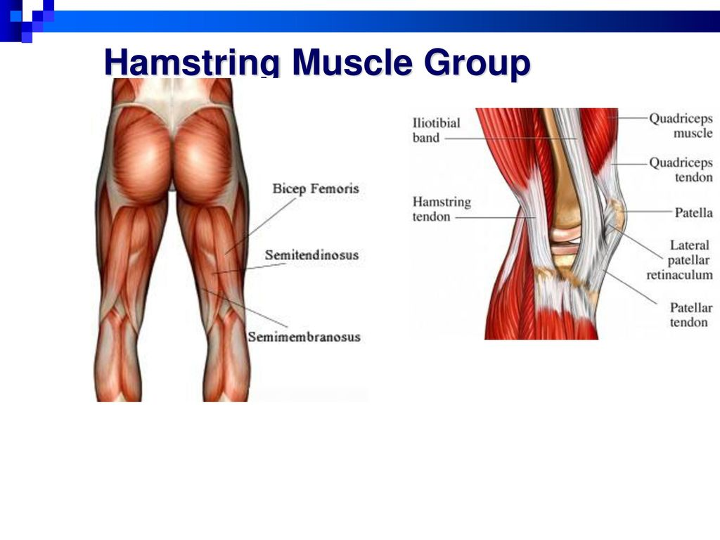 Set 10 Muscles Hip And Hamstrings Ppt Download