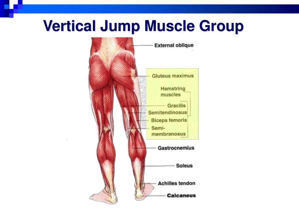 Set 10 Muscles Hip and Hamstrings - ppt download