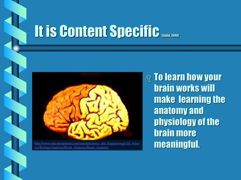 Knowing Your Brain It Just Makes Sense Sara Newton - ppt download