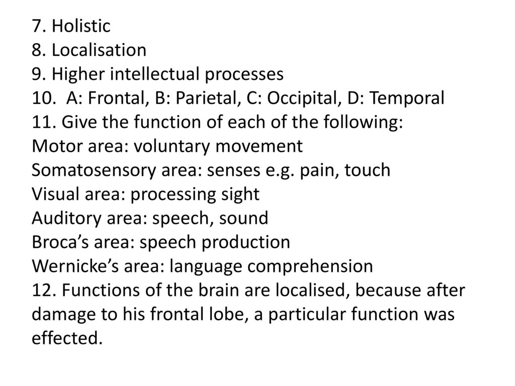 Intro to Localisation of function in the brain - ppt download