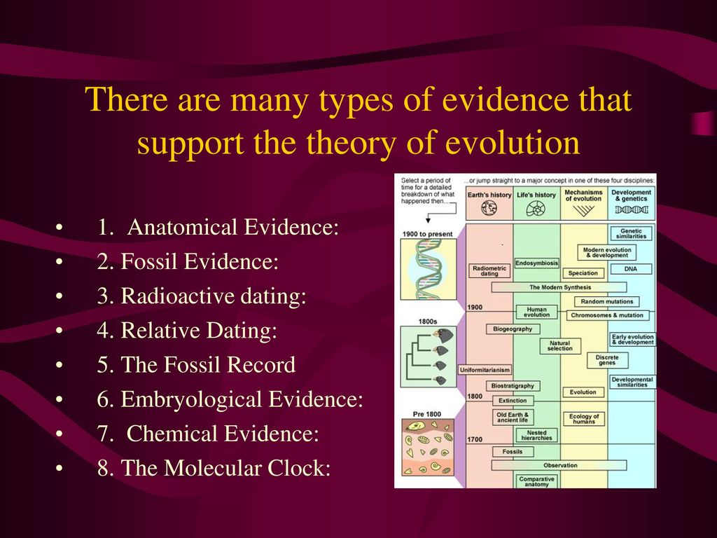 Relative dating supports evolution