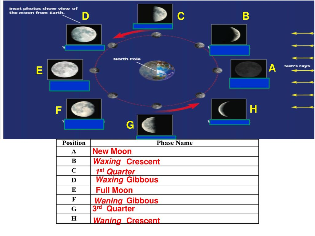 The Moon's Phases  - ppt download