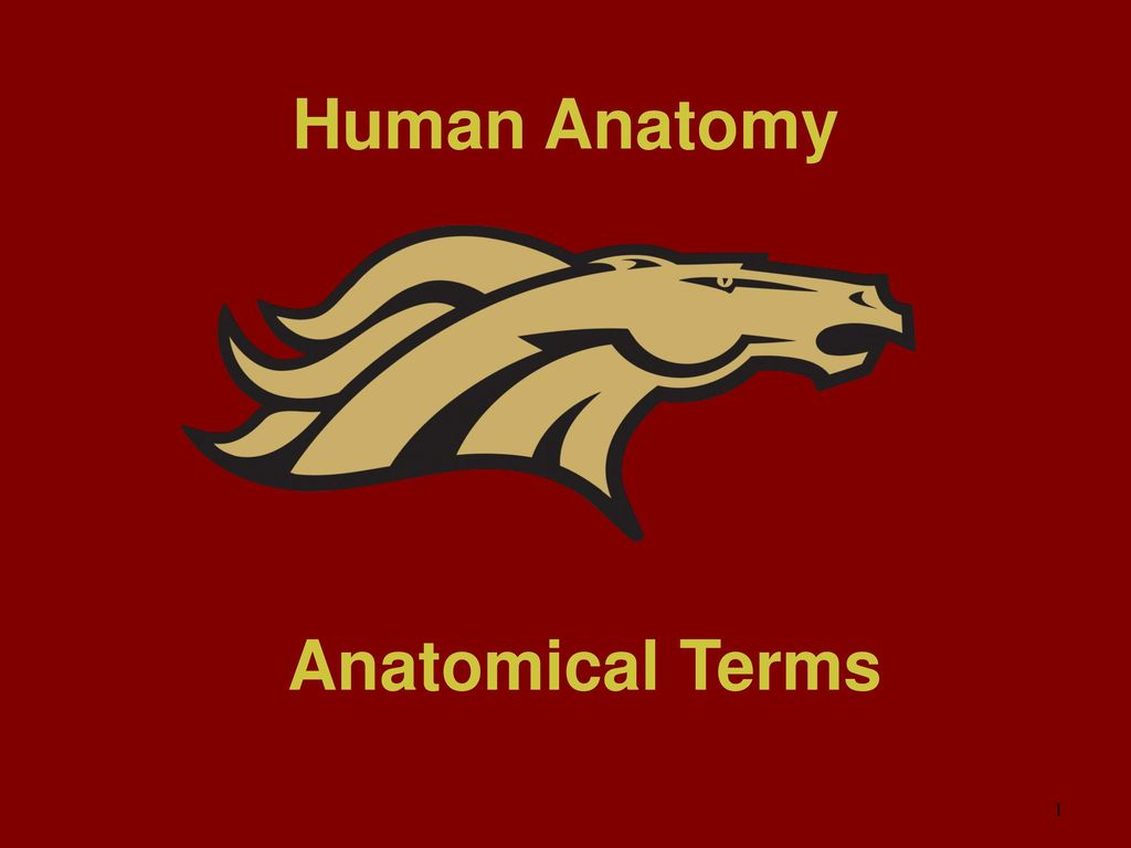 Human Anatomy Anatomical Terms Ppt Download
