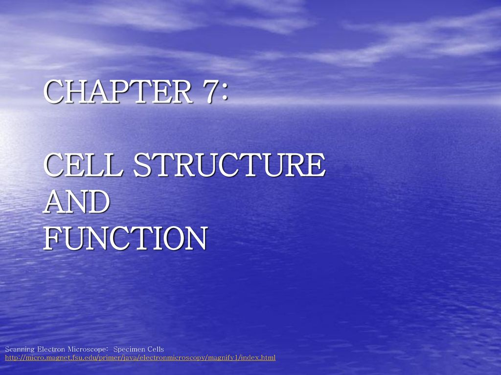 Chapter 7 Cell Structure And Function Ppt Download Prokaryoticcelljpg