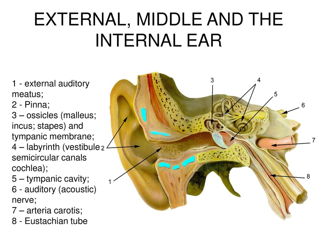 ANATOMY AND PHYSIOLOGY OF THE EXTERNAL EAR, MIDDLE EAR AND INNER EAR ...