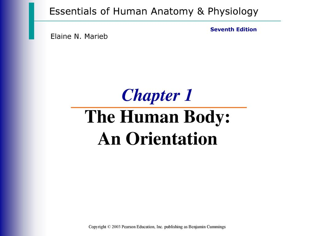 Perfect Chapter 1 Study Guide Anatomy And Physiology Embellishment ...