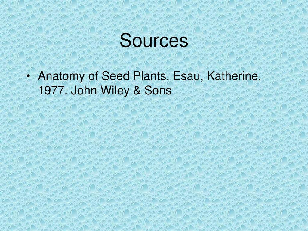 HOYA PURPUREOFUSCA Family Asclepiadaceae. - ppt download