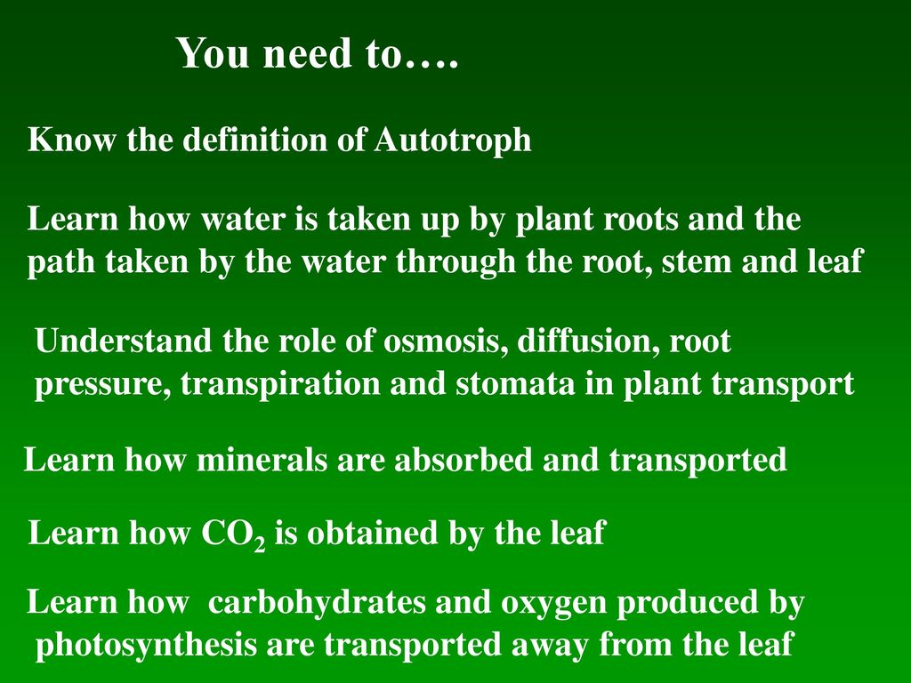 3.3.1 nutrition in the flowering plant. - ppt download