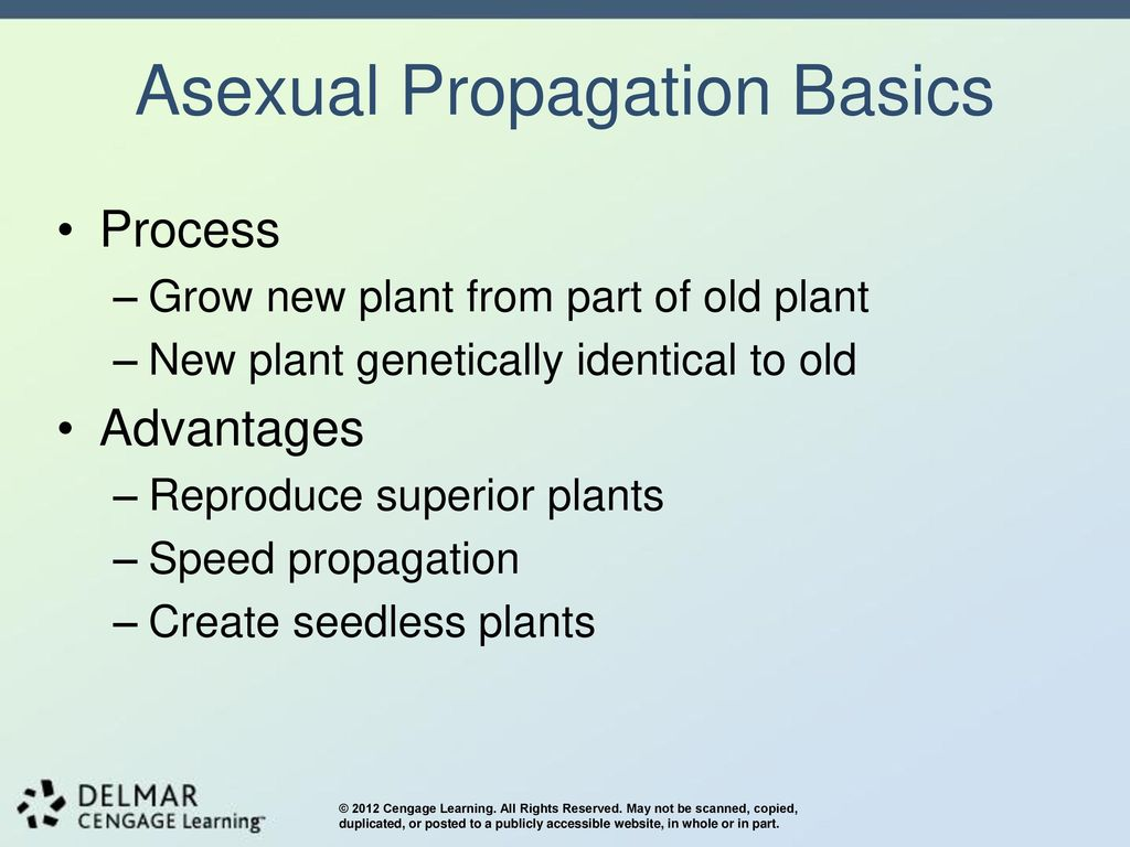 Advantages of asexual reproduction propagation speed