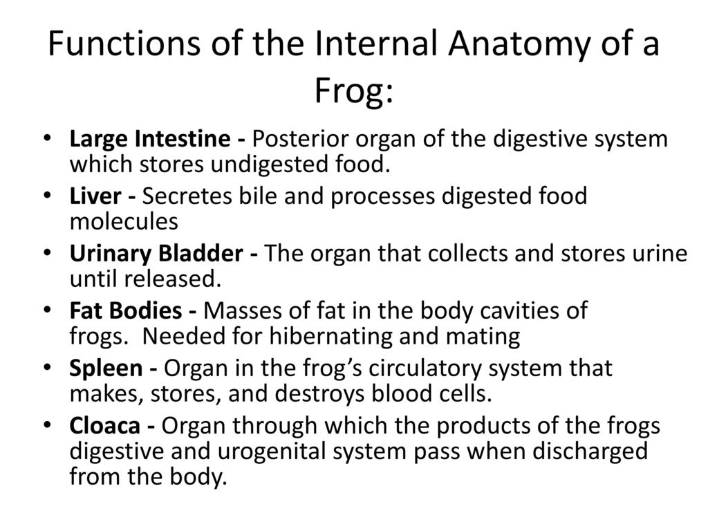 Frog Dissection. - ppt download
