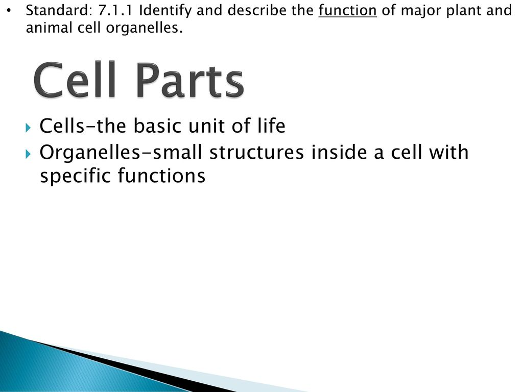 Cell structure standard identify and describe the function of major 4 cell parts cells the basic ccuart Gallery