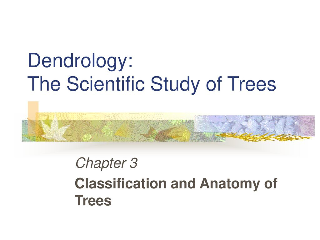 Dendrology The Scientific Study Of Trees Ppt Download
