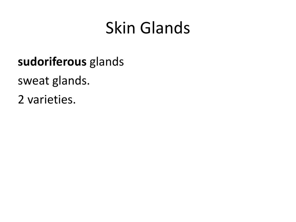 Skin Glands sudoriferous glands sweat glands. 2 varieties.