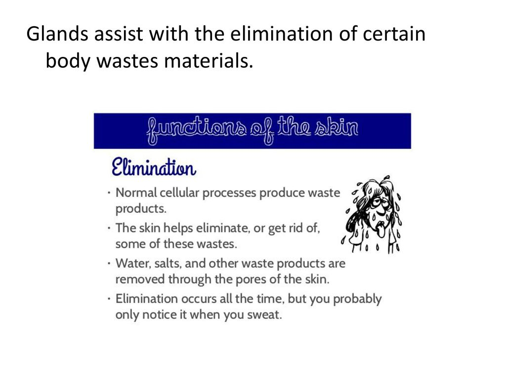 Glands assist with the elimination of certain body wastes materials.