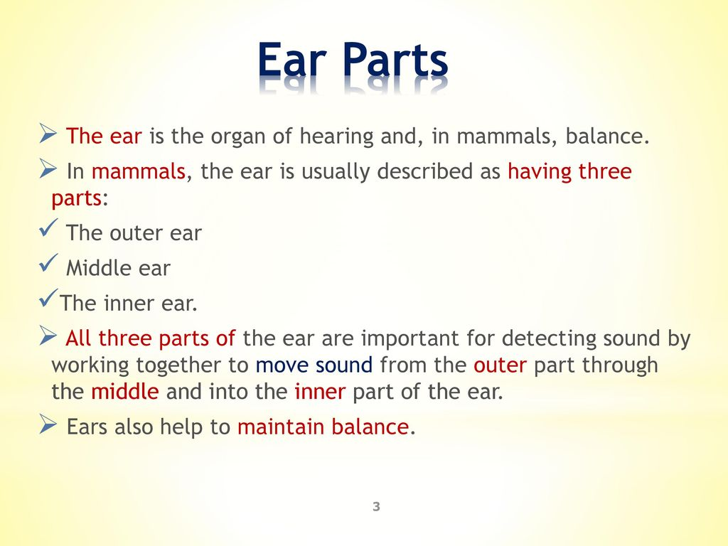 Lab 11 : Human Ear Anatomy Biology Department. - ppt download