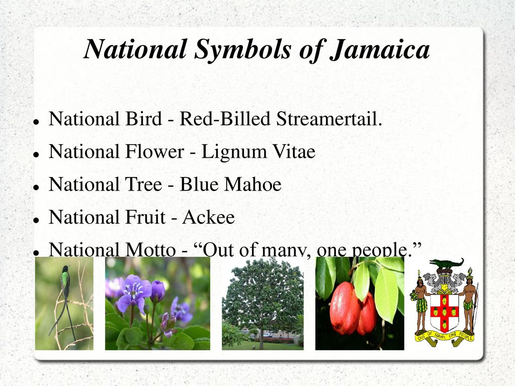 Jamaica By Charlotte Green Ppt Download