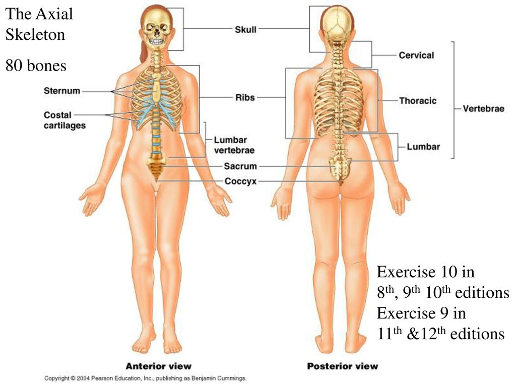 Exercises 9, 10, &12 in 8th, 9th, 10th Ed - ppt download