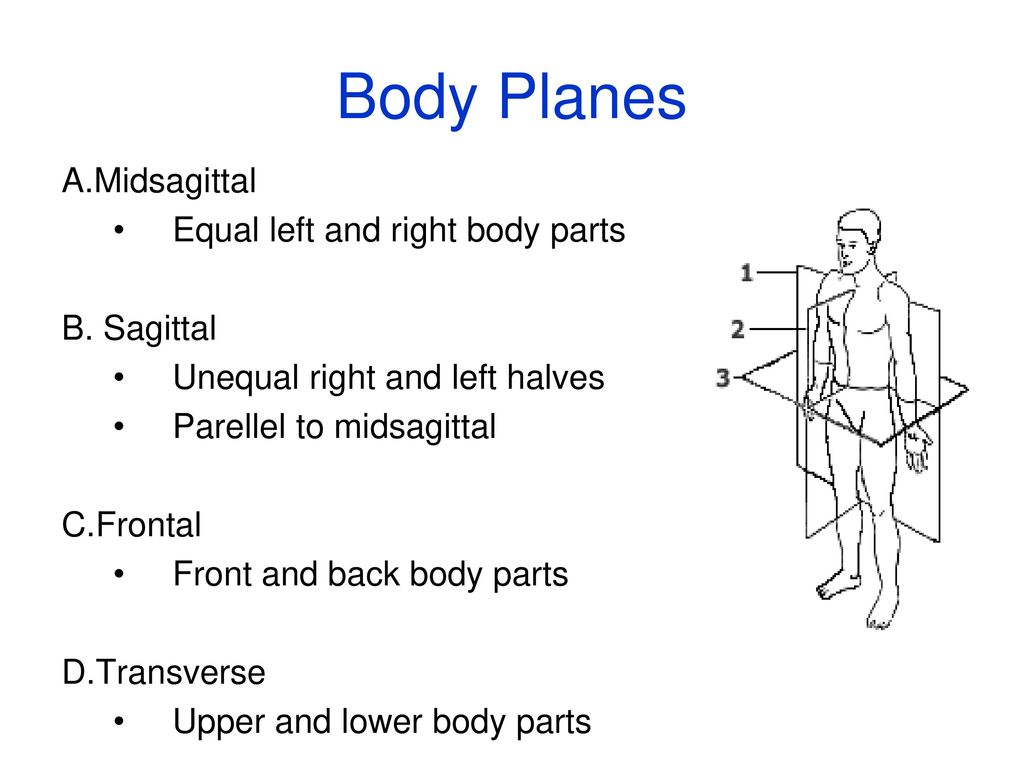 Language Of Anatomy Ppt Download Body Schematic 22