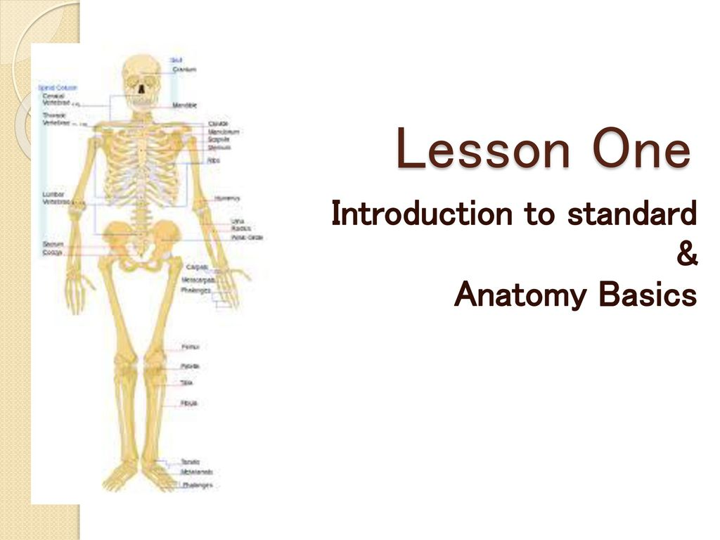 Introduction To Standard Anatomy Basics Ppt Download