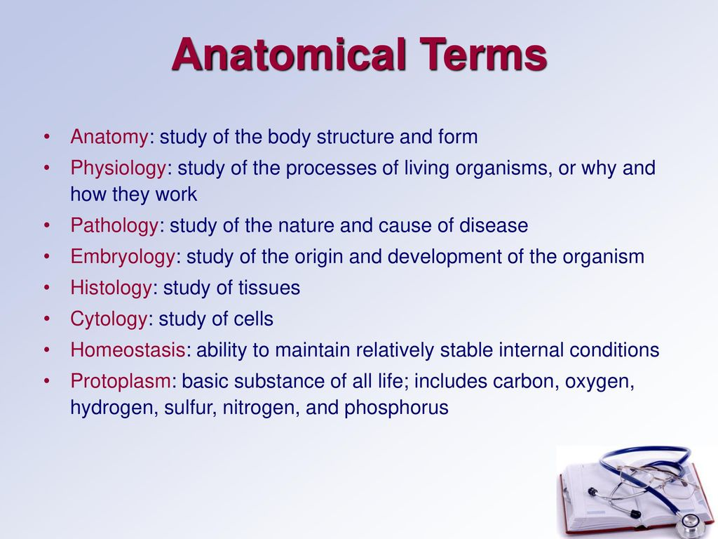 Human Anatomy Basic Structure. - ppt download