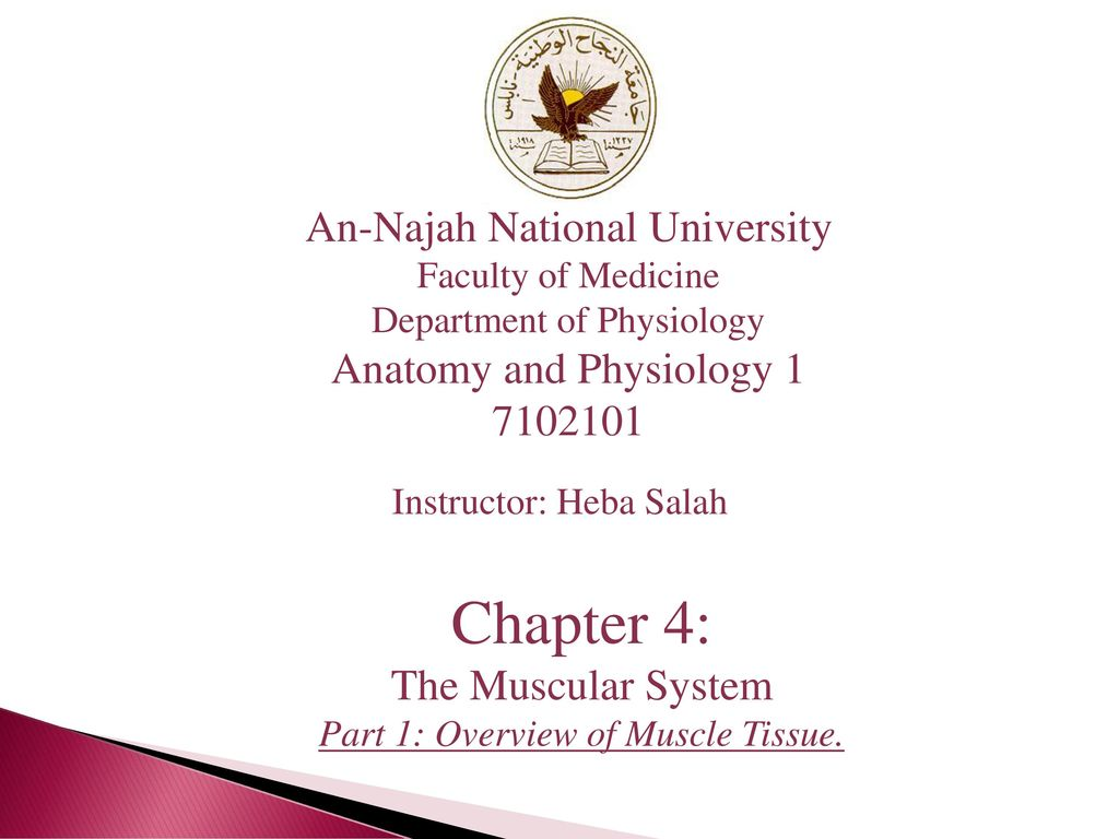 Chapter 4: An-Najah National University Anatomy and Physiology 1 ...