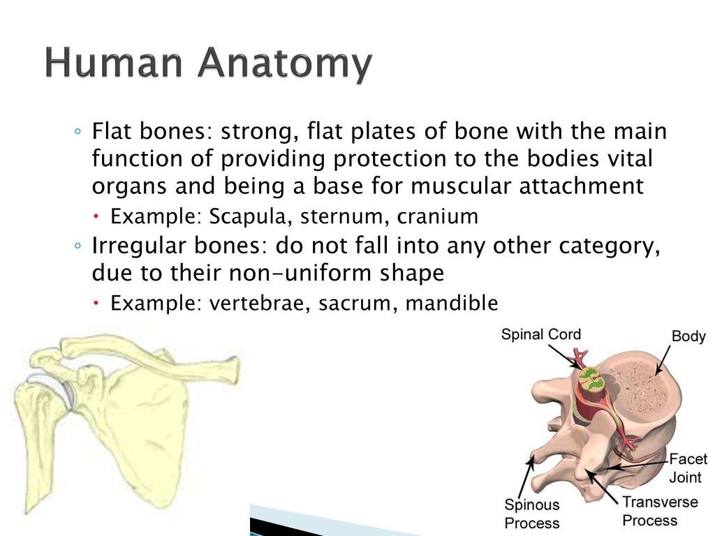 Fantastic Example Of Anatomy Illustration - Anatomy Ideas - yunoki.info