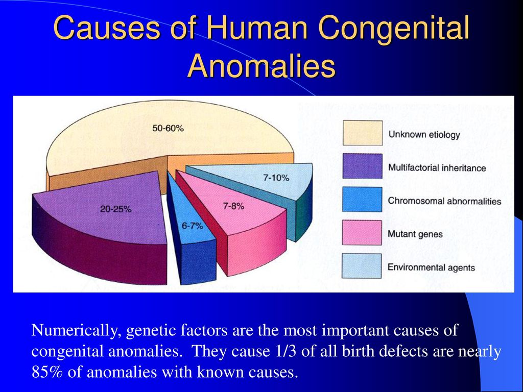 Human Embryology   ppt download