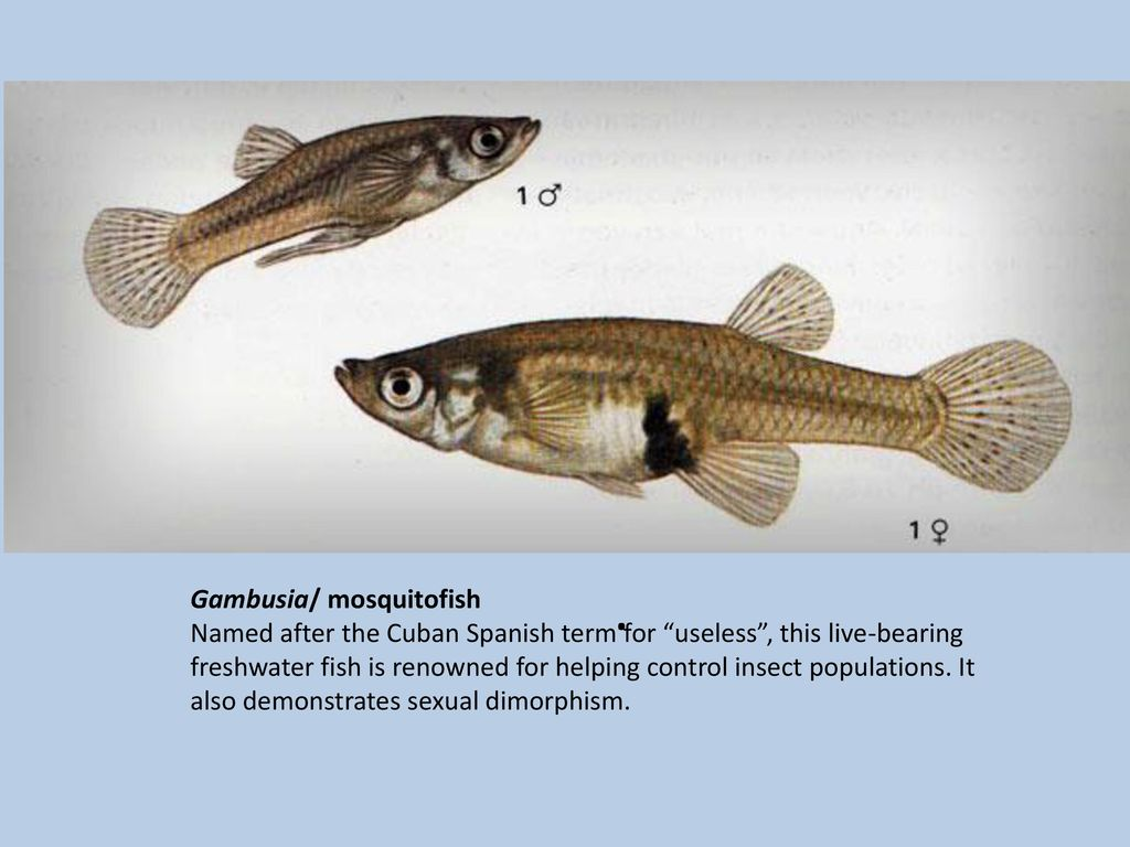 Opinion sexual dimorphism ffreshwater fish agree