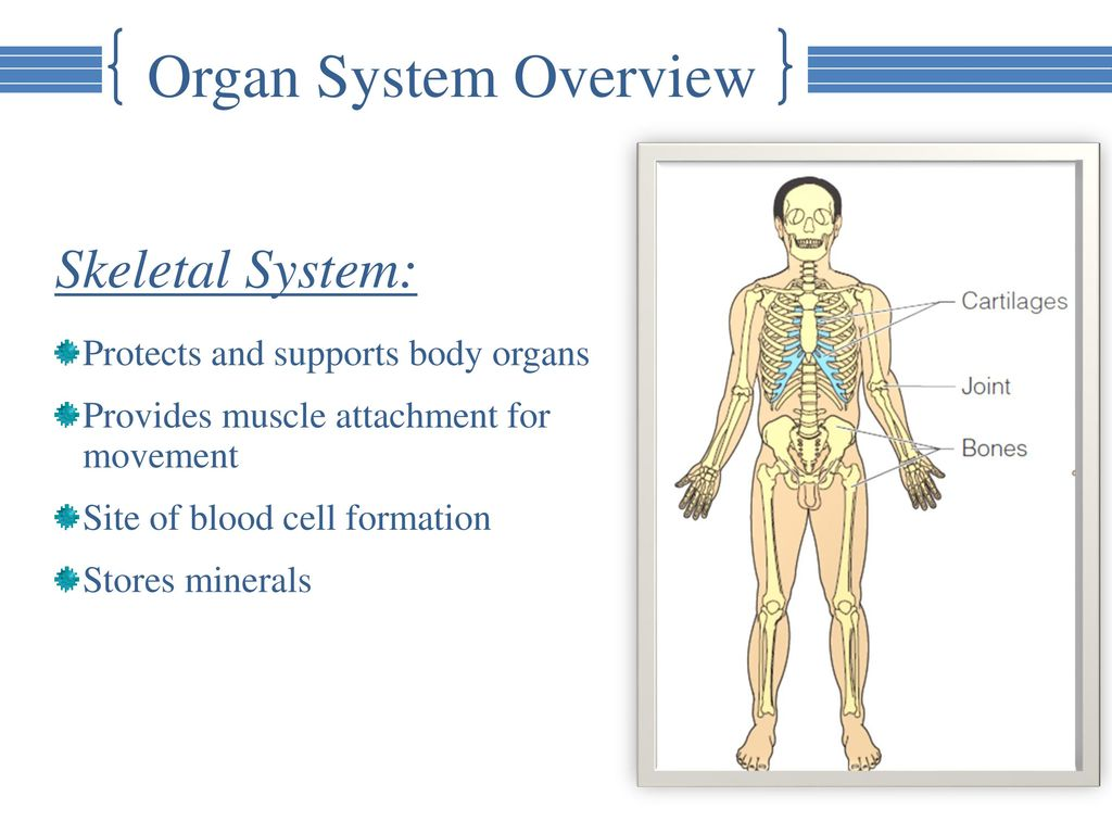 Chapter 1: Part 2: Organ System Overview An-Najah National ...