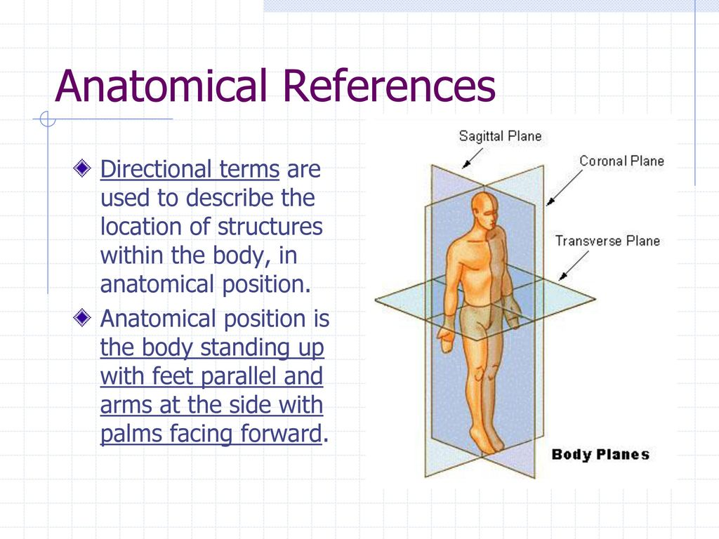 Nico Human Anatomy Planes Of The Body Bandera Imgenes De