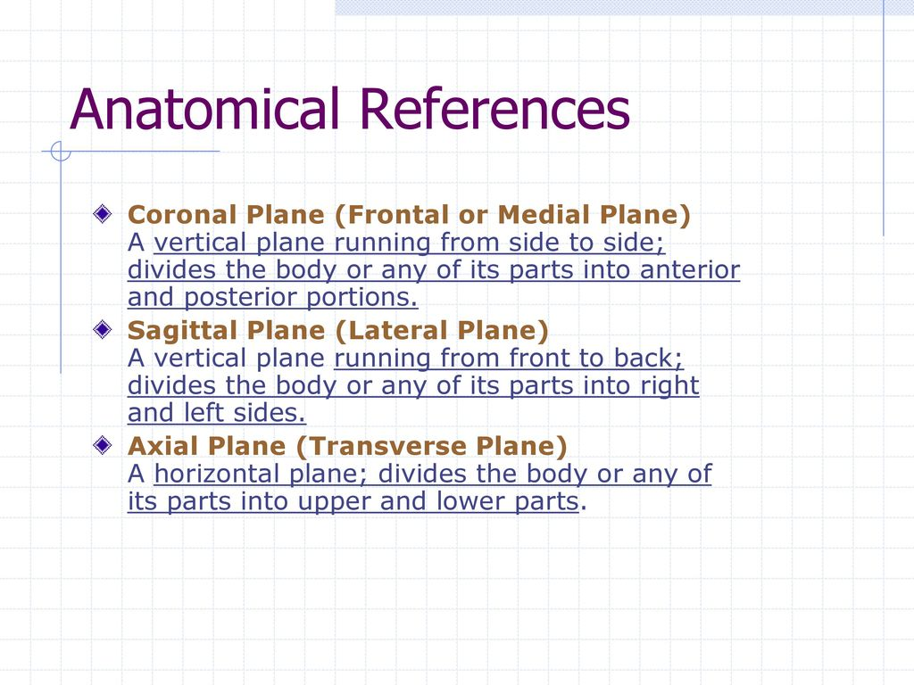 Fine Transverse Plane Anatomy Images - Anatomy and Physiology Tissue ...