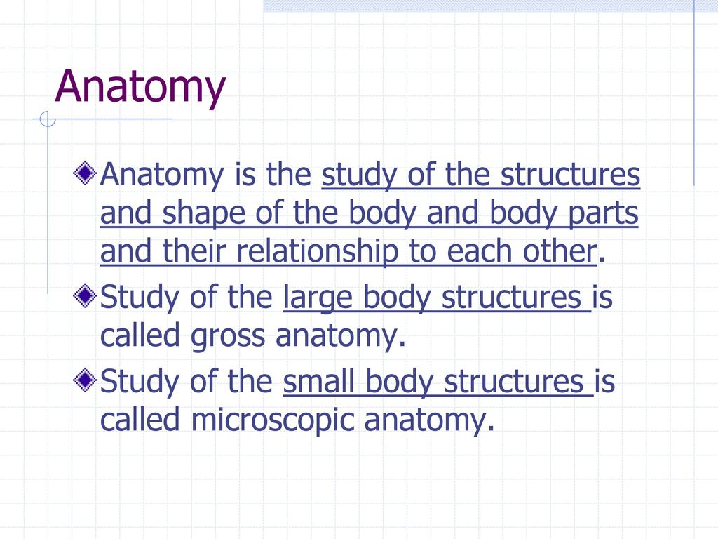 Organization of the Human Body - ppt download