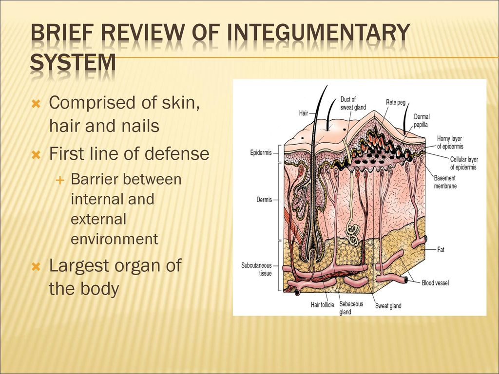 Luxury Integumentary System Nails Adornment - Human Anatomy Images ...