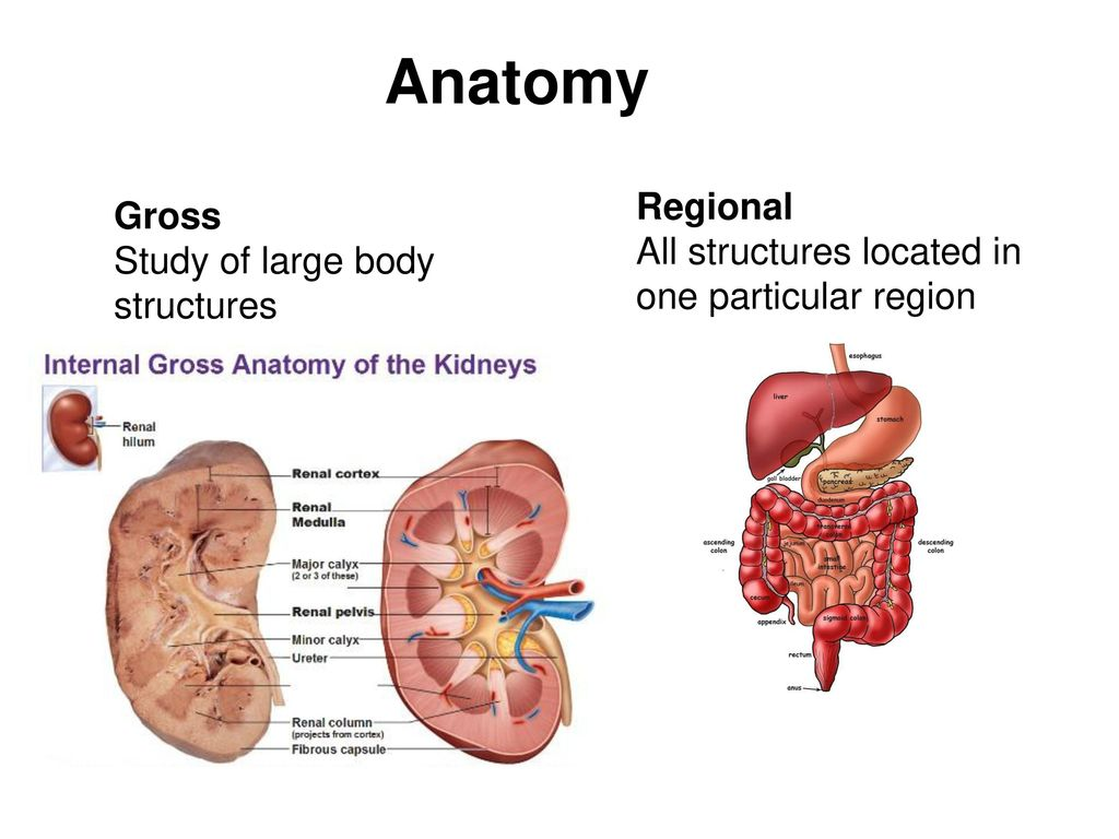 The Human Body: Ch 1 An Orientation. - ppt download