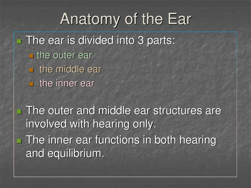 The Ear: Hearing and Balance - ppt download