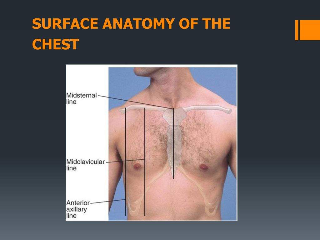 Respiratory Examination - ppt download
