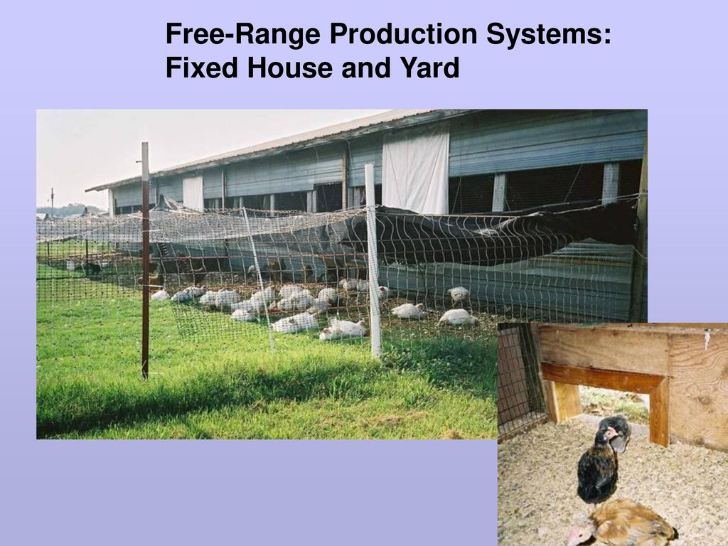 Alternative Poultry Production - ppt download