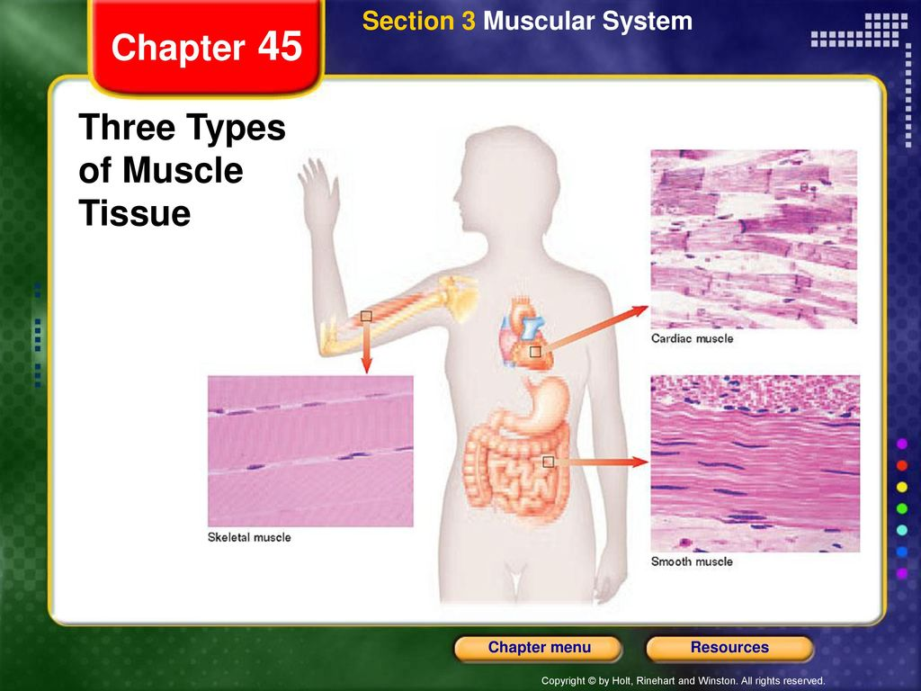 Exelent 3 Types Of Muscle Tissue Motif - Anatomy and Physiology ...