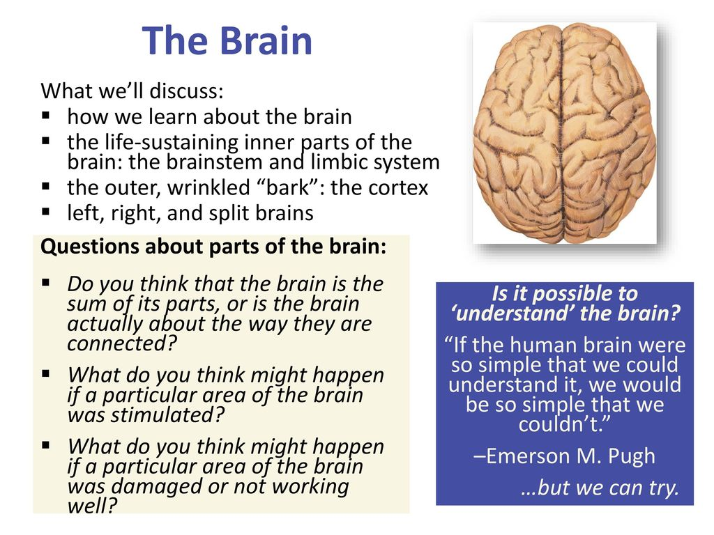 Ch 3 section 2 the brain quiz on this lecture on thursday ppt is it possible to understand the brain ccuart Images