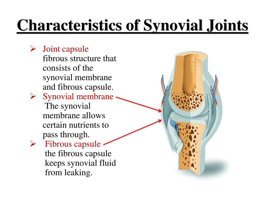 Fibrous Capsule Topsimages