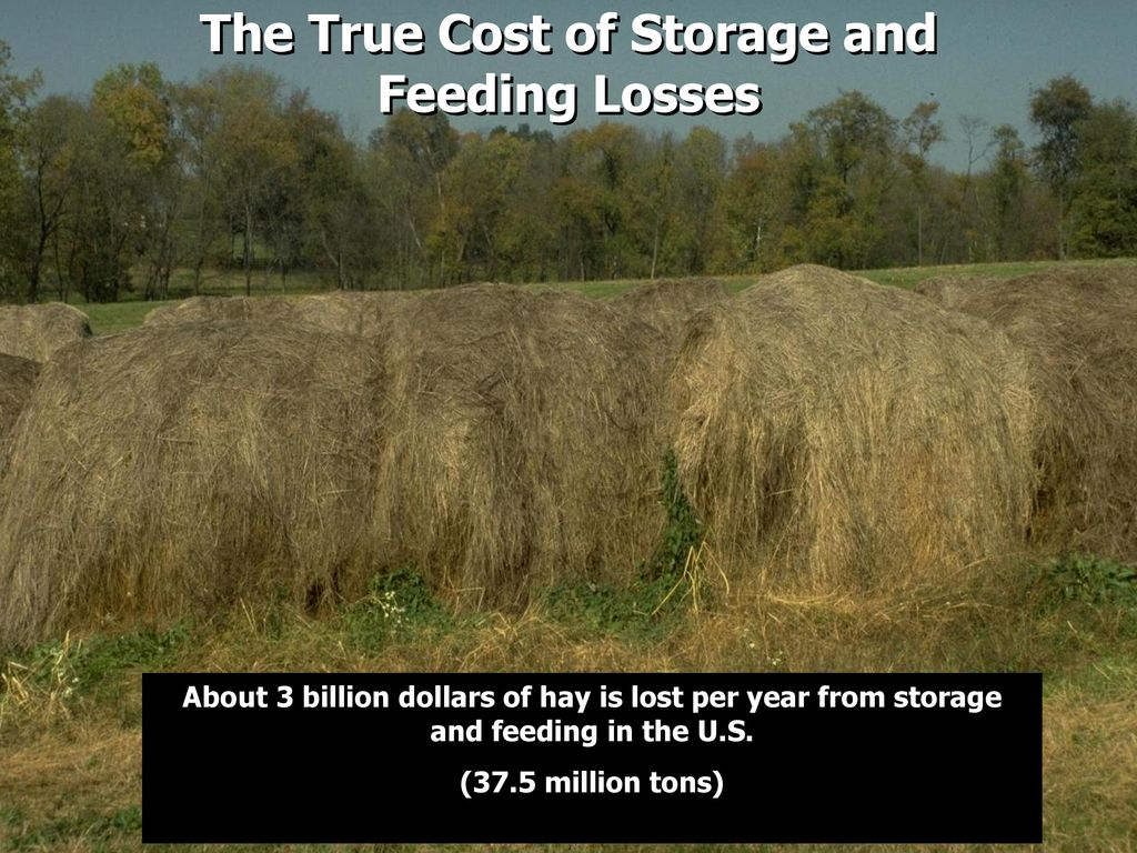 Cost Of Hay Preservative