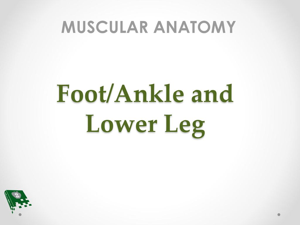 Foot/Ankle and Lower Leg - ppt download